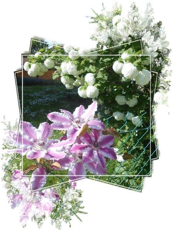 La couleur de la fleur à une signification importante