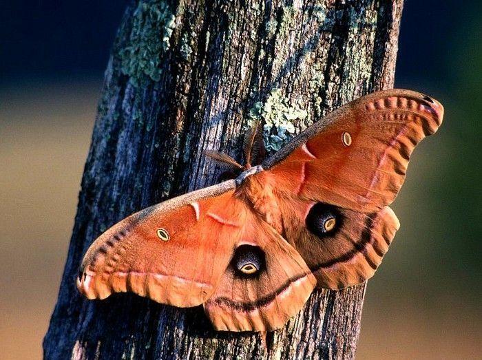 Les papillons. - Page 2 13_8