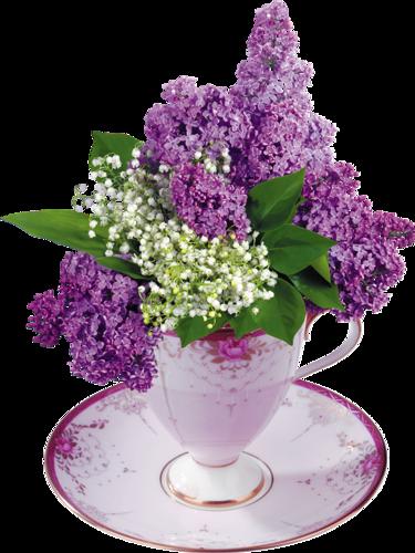 tubes de fleurs les lilas