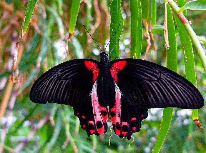 Les papillons. - Page 2 18_4