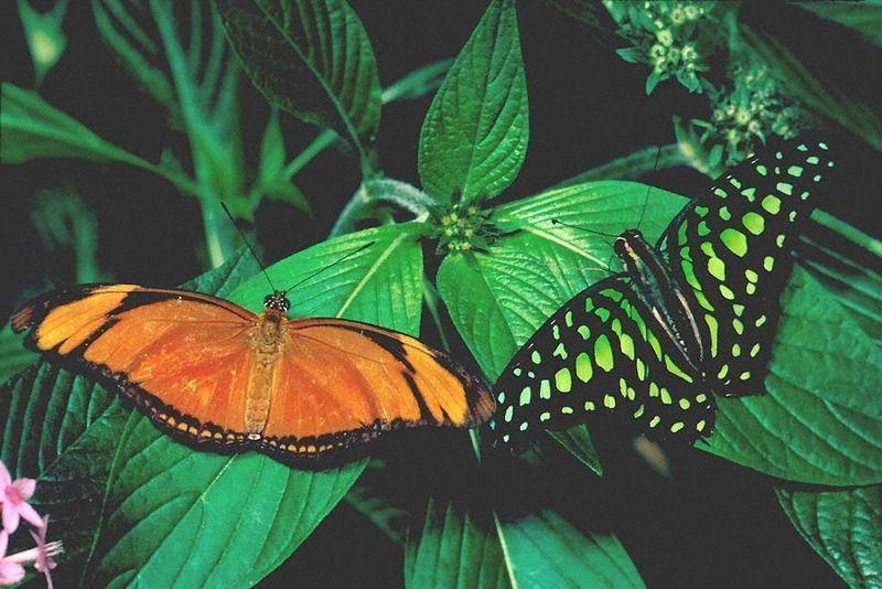 Les papillons. - Page 3 1_24