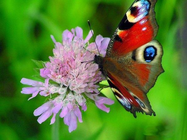 Les papillons. - Page 2 1fa4002b