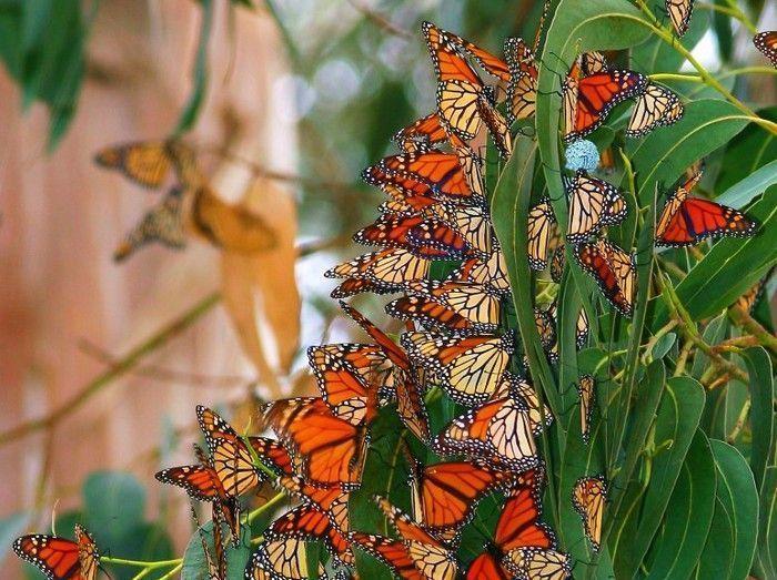 Les papillons. - Page 2 20_1