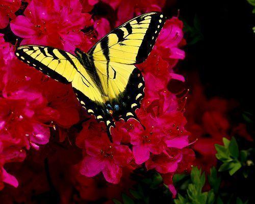 Les papillons. - Page 3 2_23