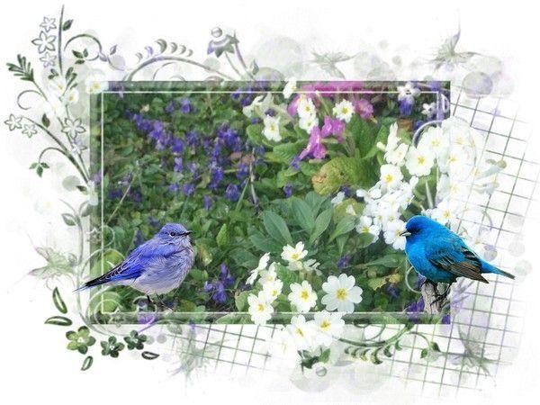 L'oiseau bleu ** Poème **