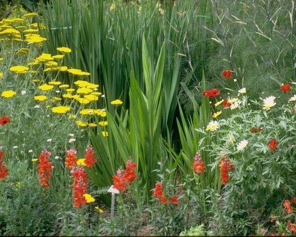 Image de fleurs