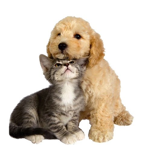 images de chien et chat  56ce9be3