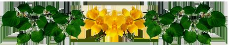 Barre de séparation fleurs