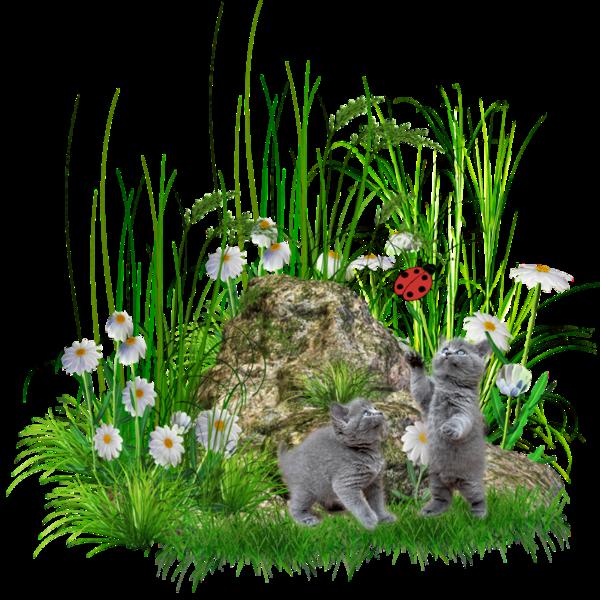 Tubes de Printemps paniers avec fleurs brouettes arbres