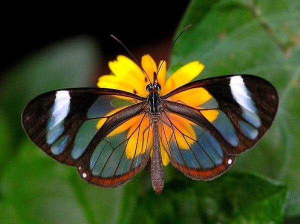 Les papillons. - Page 2 6a7377cb