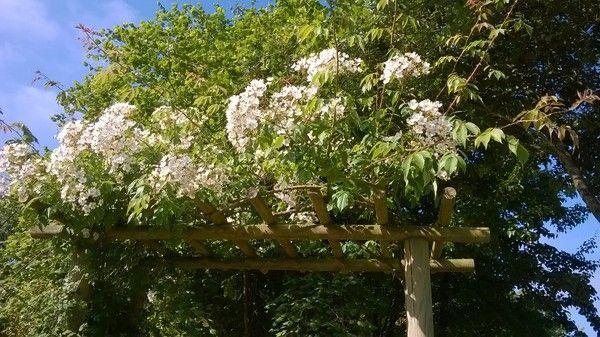 Photos du jardin des hesp rides de la chapelle sur erdre for Au jardin des hesperides