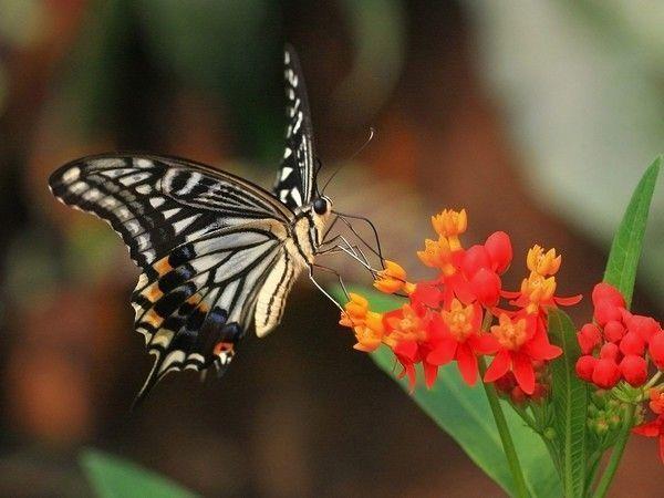Les papillons. - Page 3 7_7