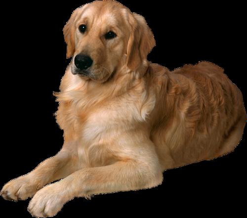 фото собаки пнг