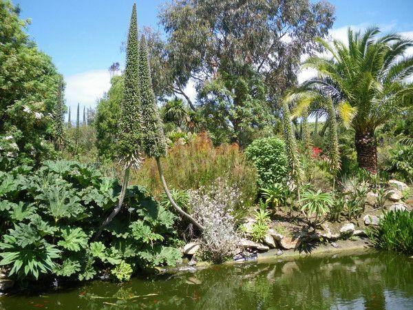 Mes photos jardin exotique a roscoff - Le jardin exotique de roscoff ...