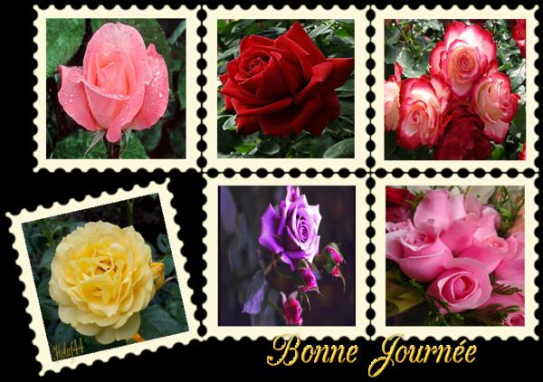 Superbes roses