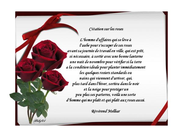 Citations sur les roses et sur la tendresse