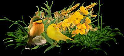 Barre de séparation oiseaux pour vos créations