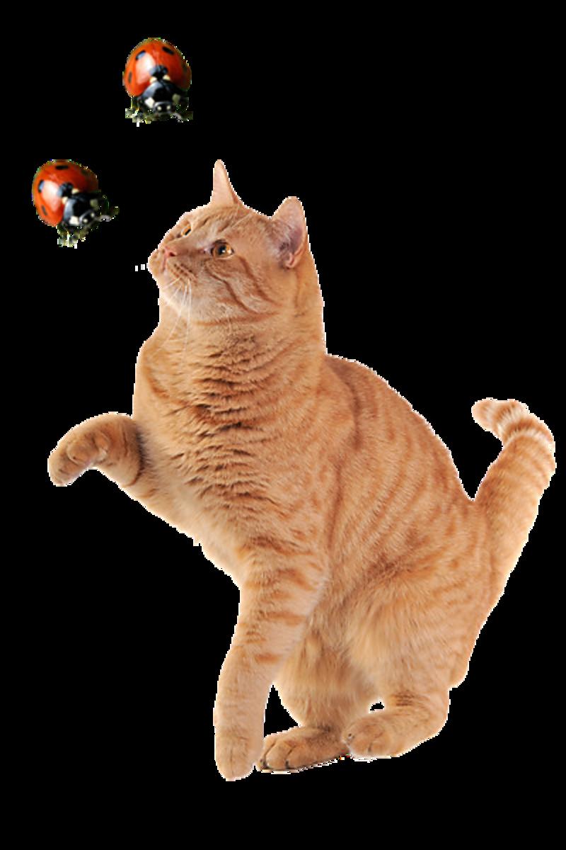 chat-et-coccinelles.png