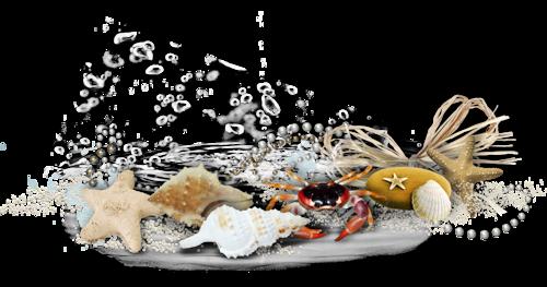 Résultat d'images pour Gifs barres de séparation coquillages mer