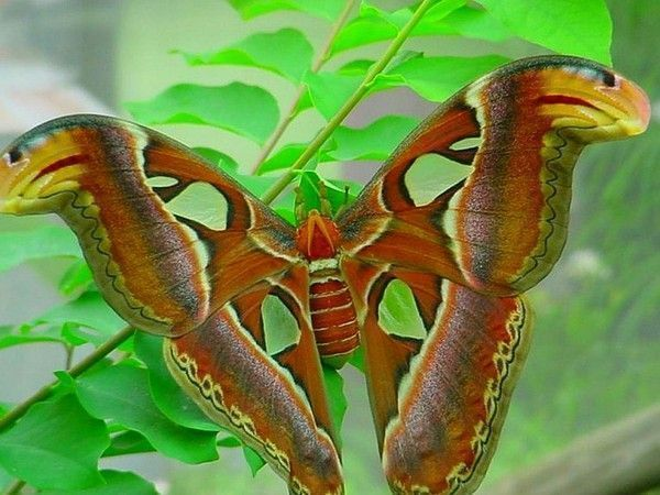 Les papillons. - Page 2 Df5331da