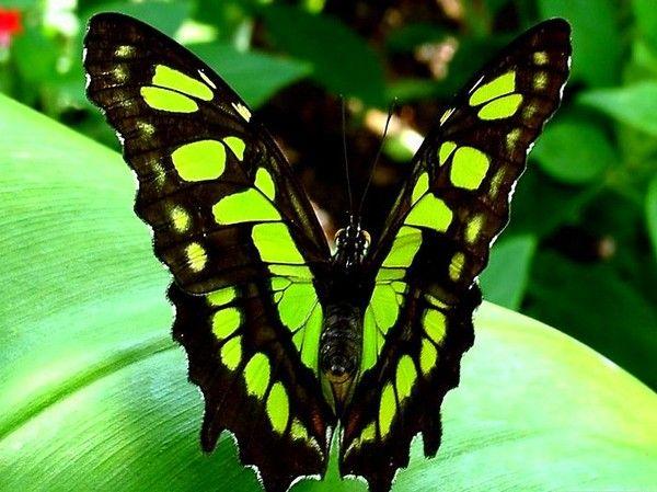 Les papillons. - Page 2 E4f13f8a