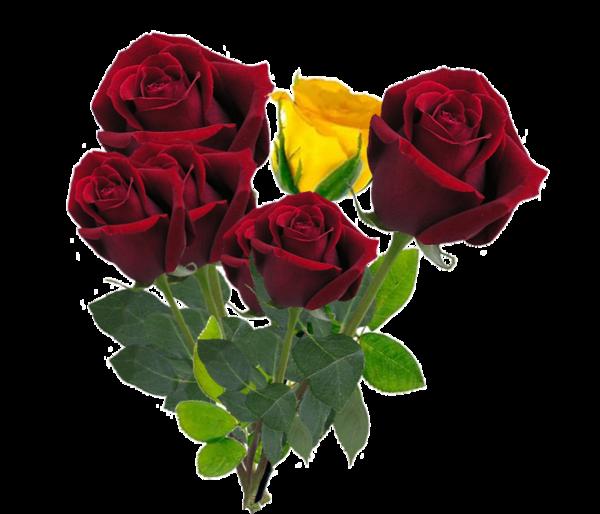 L'Histoire de la Rose