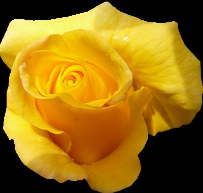 La signification des couleurs fleurs et autres for La couleur jaune signification