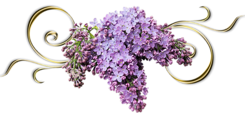 lilas_3.png