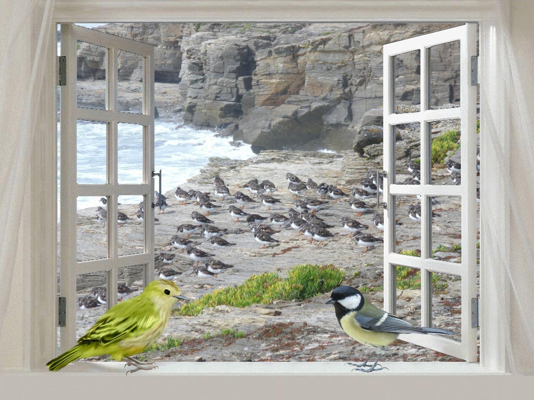 Poemes pour oiseaux page 4 for Lorie par la fenetre je regarde seul parole