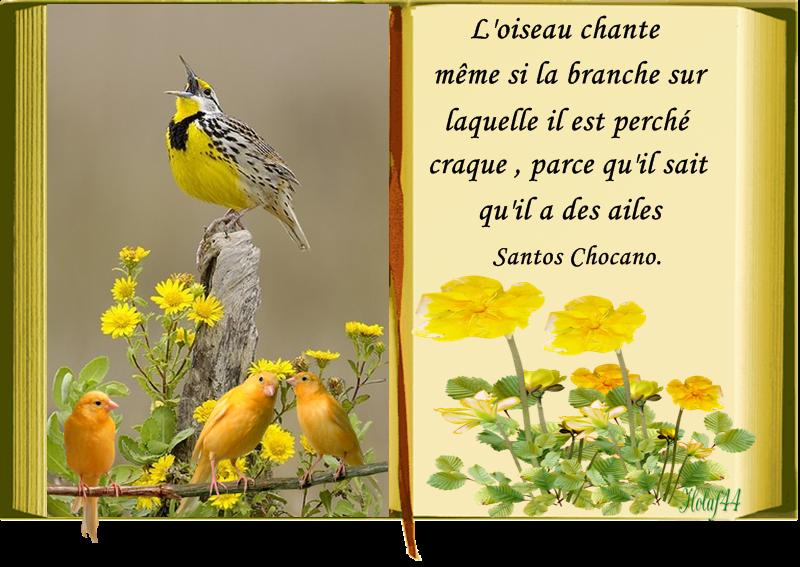 Poemes Pour Oiseaux
