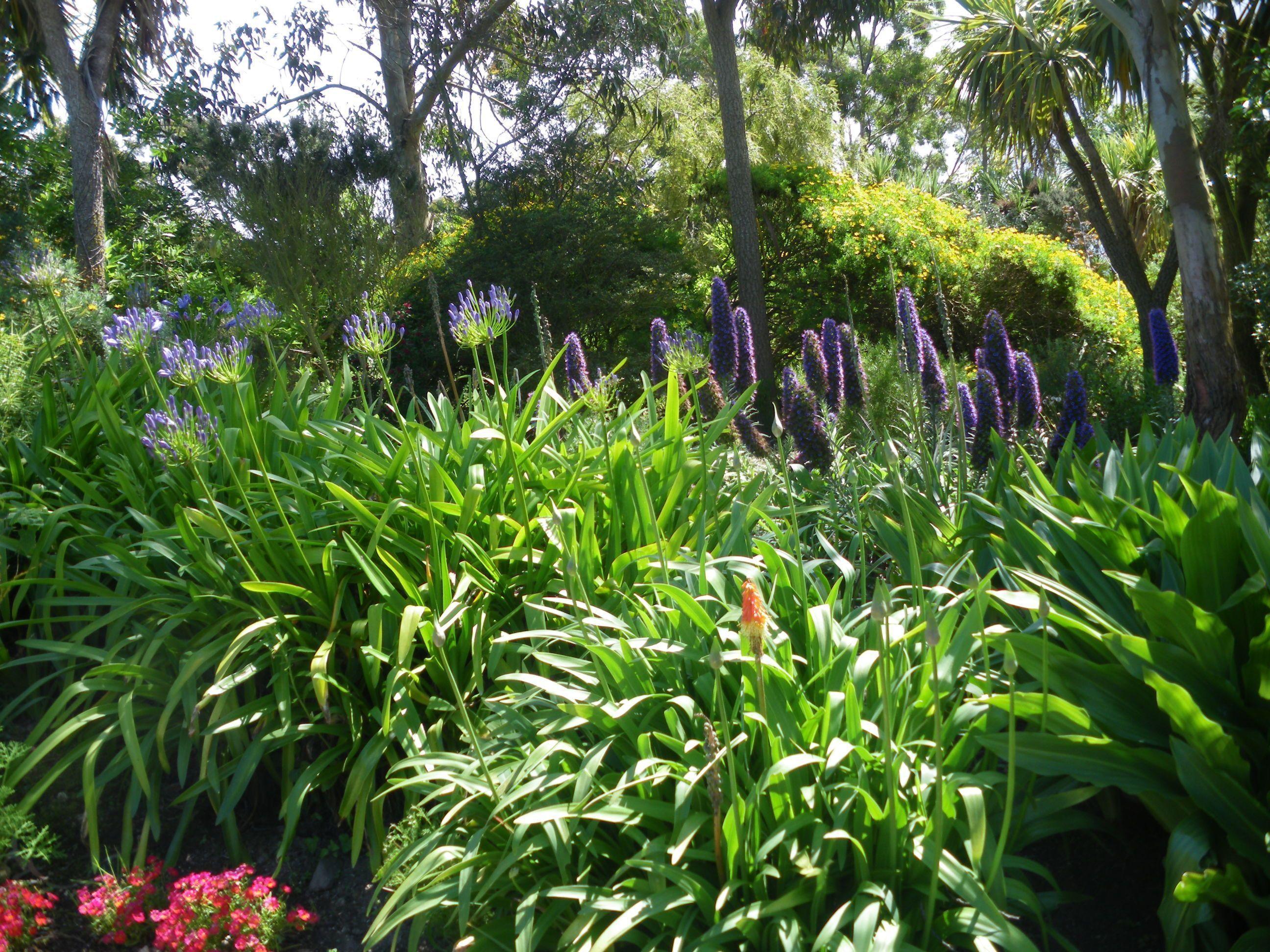 mes photos jardin exotique a roscoff - Page 6