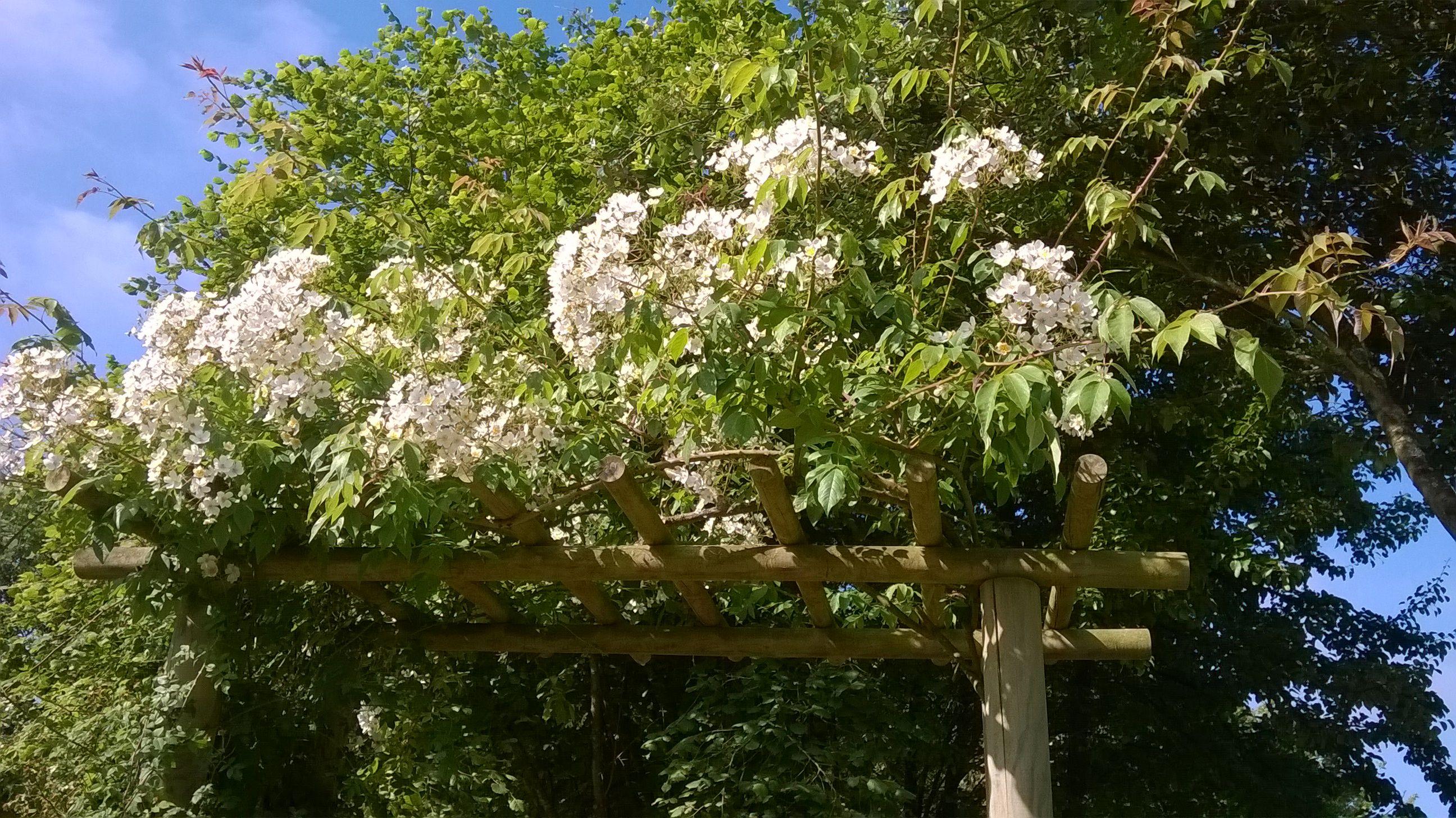 Mes photos de la chapelle erdre for Jardin hesperides
