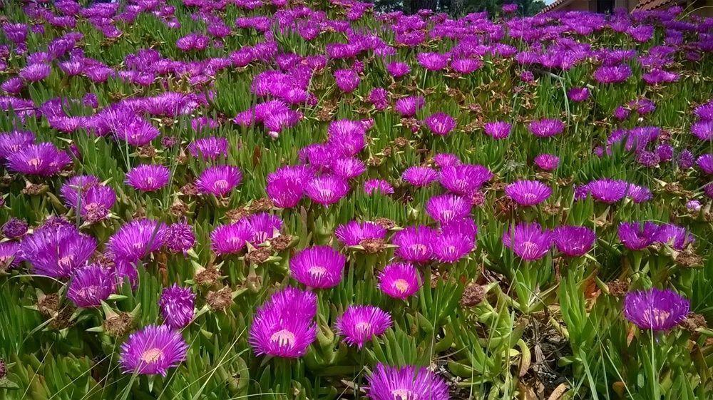 Les fleurs bon a savoir for Plante arbustive fleurie
