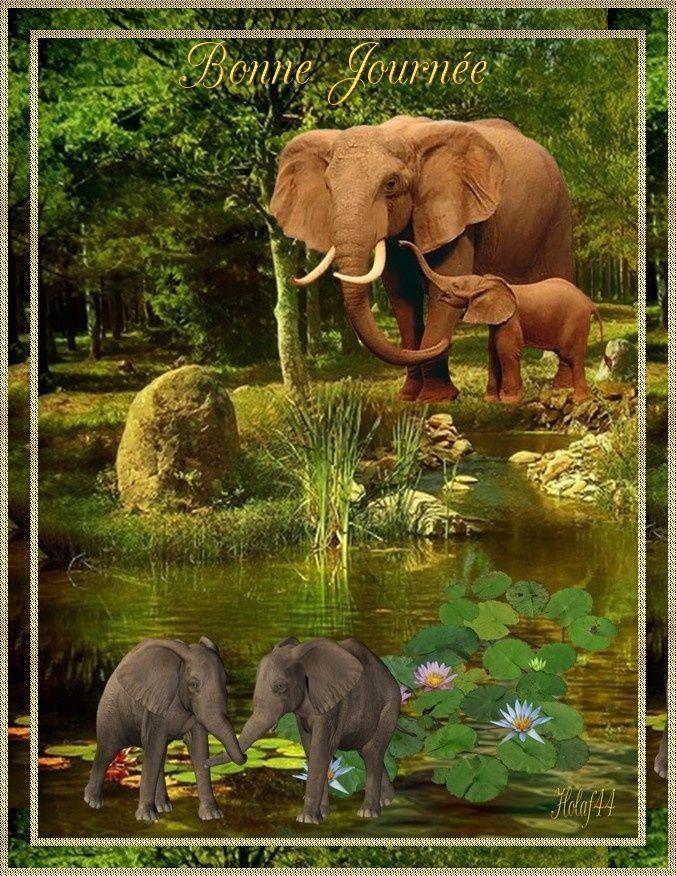 Poème Sur Les Eléphants
