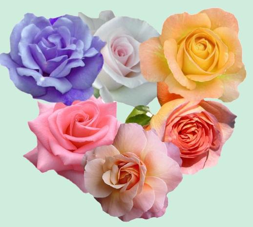 roses-de-photofiltre.png